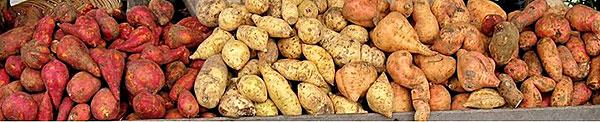 Batatas-doces de várias cores