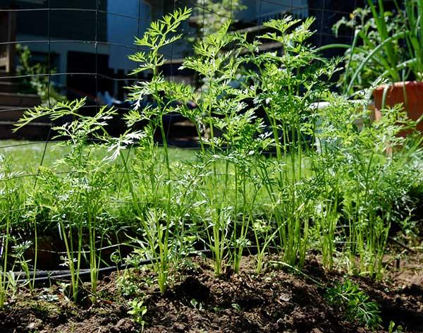 Plantio direto uma nova forma de sustentabilidade no campo 4