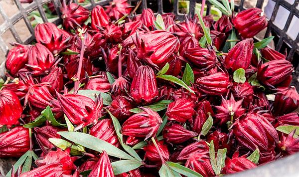 Cálices das flores de vinagreira